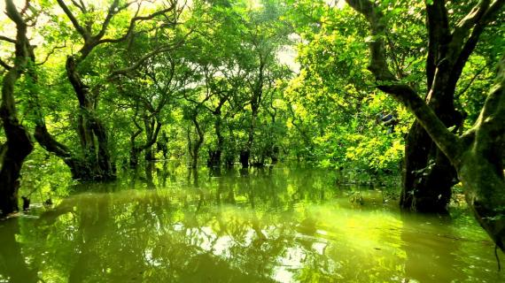 Swamp Forest in Bangladesh