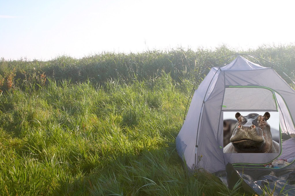 Camping 2 field